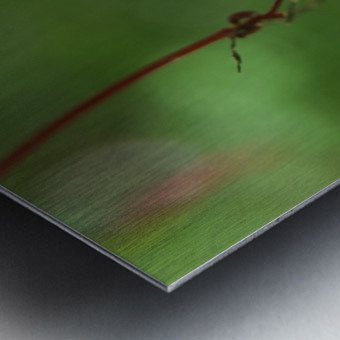 Japanese Maple Seed Metal print