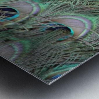 peacock feather pattern plumage Metal print