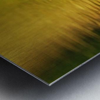 Merganser In Setting Sun Metal print