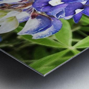 Bluebonnet Metal print