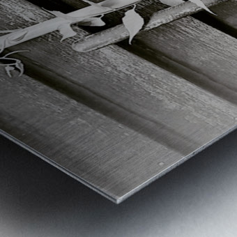 Garden tool vines Metal print