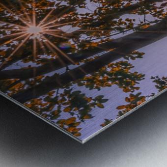 DSC_0328 Metal print