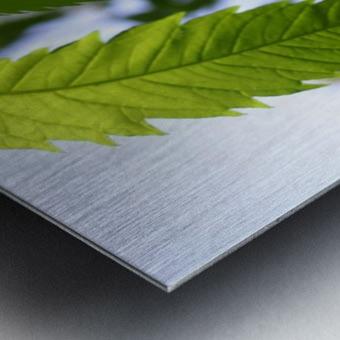 leaf with light Metal print