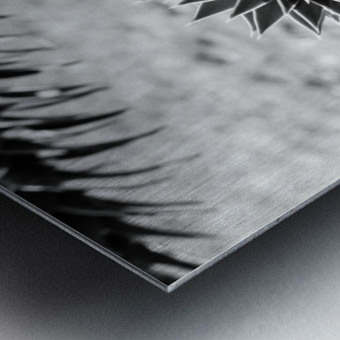 Plant Image BW Metal print