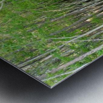 Swamp in Carolina Metal print