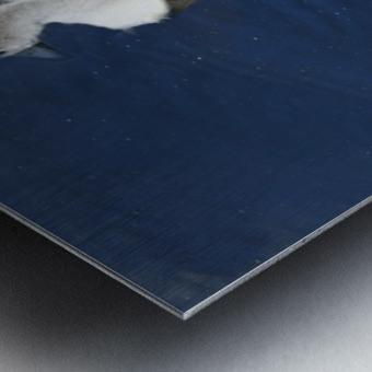 Sygnets Metal print