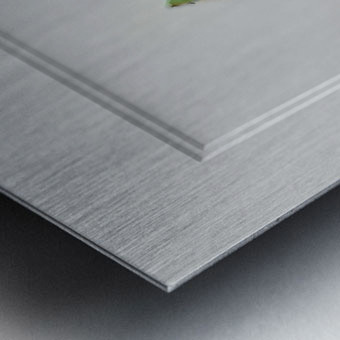 Snap Pea Metal print