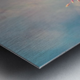 Spikelet Metal print