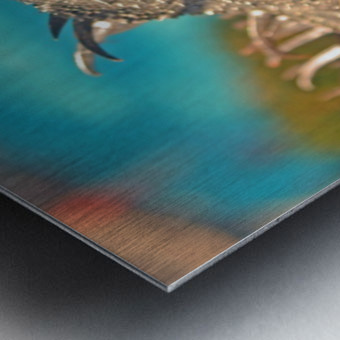 Spiny-Tailed Iguana Metal print