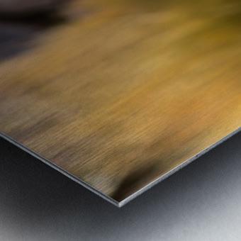 Viscacha Metal print