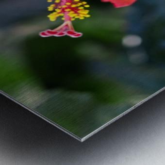Clear Cutting Metal print