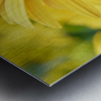 Floral Photography  Metal print