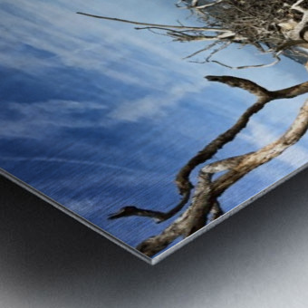 Driftwood Beach Panorama Shadows Metal print