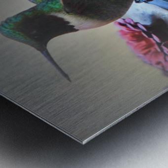 Colibris Impression metal