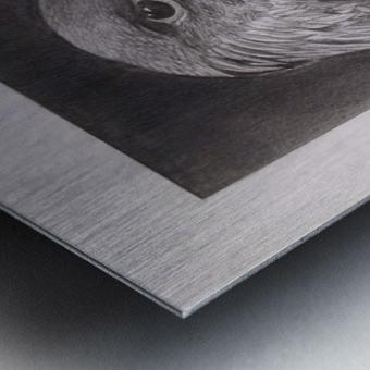 Falcon_DKS Metal print