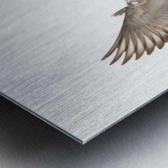 Take Flight Metal print