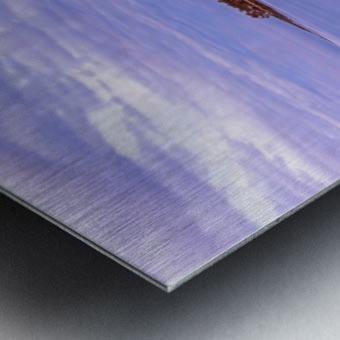 Icy Metal print