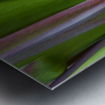 Spider Agave Stalk Metal print