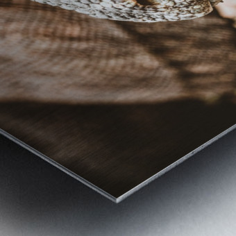 The Komodo Dragon  Metal print