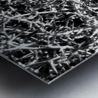 Black & White Nature Metal print