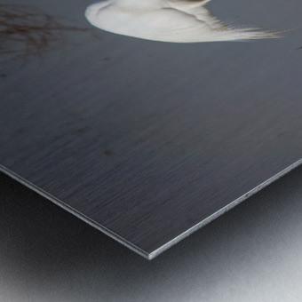 The Kiss White Egret Metal print