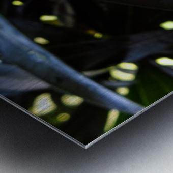 Raindrop on a green leaf Metal print