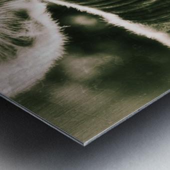 Gitane Metal print