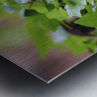 Duck In Plants Metal print