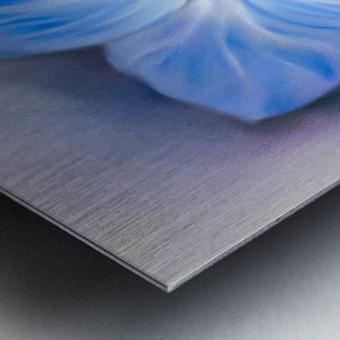 Blue Hydrangea Blossoms Metal print