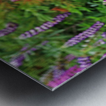 Shades Of Purple Lupine Metal print