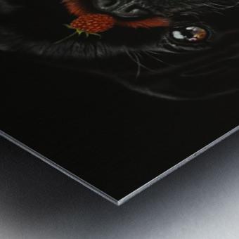 RASPBERRY PUG_COLOR PENCIL_51X69.30 Metal print