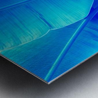Blue Bananas - Re-Imagined Tropical Biophilia Metal print