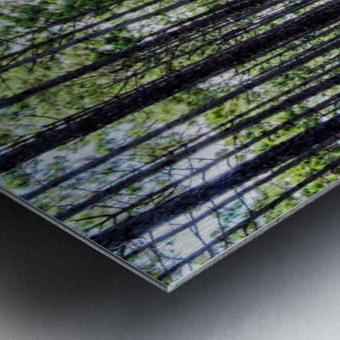 Forest Escape Metal print