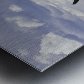 Eagle on Lake Metal print