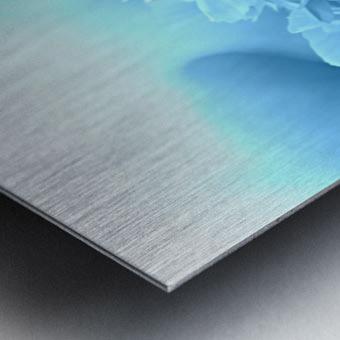 Heavenly Peony Aqua Blue Metal print