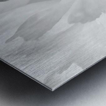 Peony III Black and White Metal print