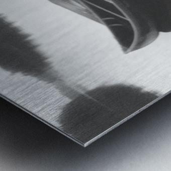 Tranquility BW Metal print