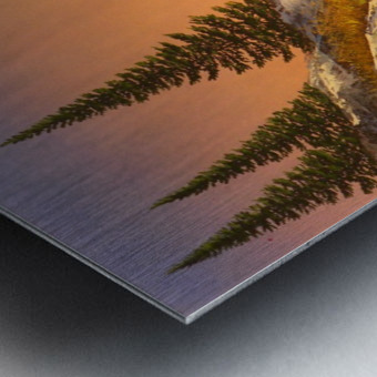 Sunset Spruces Metal print