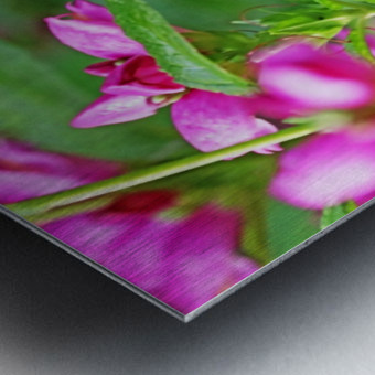 The Lure Of The Pink Turtlehead Metal print