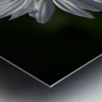 marguerite Metal print