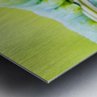 an Daphnis Nerii Metal print
