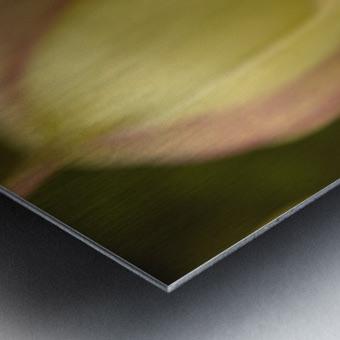 Beauty in a Gentle Breeze Metal print