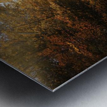 Lumiere automnale Metal print