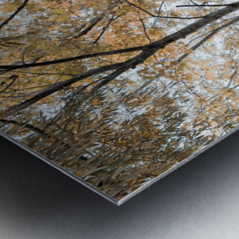Lumiere automnale 2 Metal print