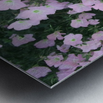 Flower Garden 2 Metal print