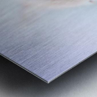 catshadow Metal print