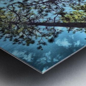 Tree Tops Metal print