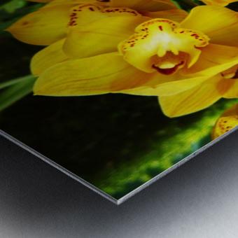 flower65 Metal print