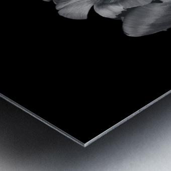 Rcoco tulip, side view Metal print