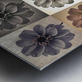 Collage of Dahlias flowers Metal print